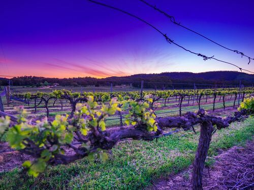 Grampians and Pyrenees Wine Regions