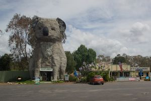 The Big Koala - Dadswells Bridge